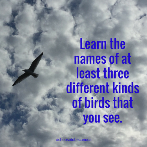 rbsh-learn-the-name-of-at-least-three-different-kinds-of-birds-that-you-see