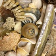 RBSH - shells