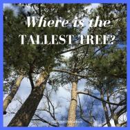 RBSH - tallest tree