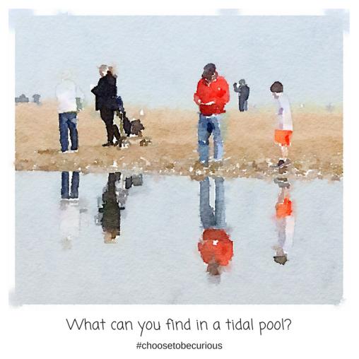 RBSH - tidal pool