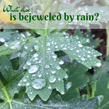 What else is bejeweled by rain?