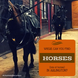 Where can you find horses (lots of horses) in Arlington?