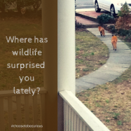 Where has wildlife surprised you lately?