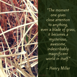 "PIX - Miller - The moment one gives close attention to anything, even a blade of grass, it becomes a mysterious, awesome, indescribably magnificent world in itself."" – Henry Miller"