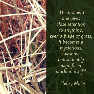 """PIX - Miller - The moment one gives close attention to anything, even a blade of grass, it becomes a mysterious, awesome, indescribably magnificent world in itself."""" – Henry Miller"""