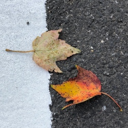 Day 3: The street painters' leaf blowers did their best, but nature wins.