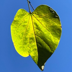 Day 17: Nice day for leaves and other living things.